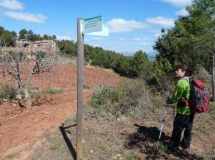 Vinyes a la Caseta de la Vall