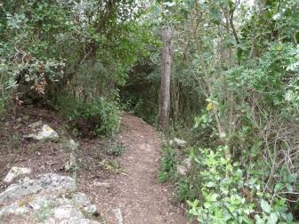 Camí emboscat per l'Eudalda