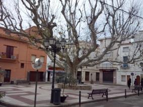 Arbre de la Plaça (plataner)