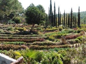 Jardí de cactus