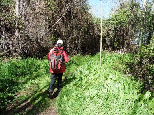 PrimPrimera Màquina (bosc)era Màquina