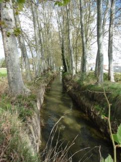 Canal d'Urgell: fileres de plataners