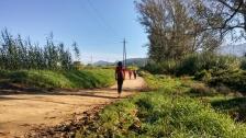 Camí del Mogent