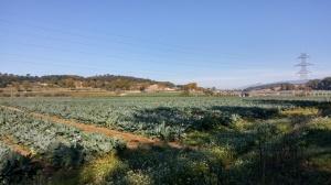 Cultius Pla de Can Puig