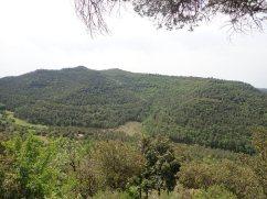 Puig Oriol