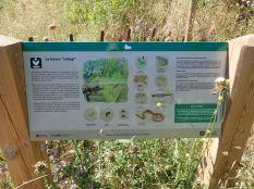 Bassa refugi amfibis