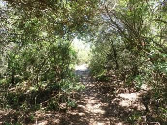 Camí emboscat pujant a Castellví